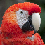 scalet macaw avatar